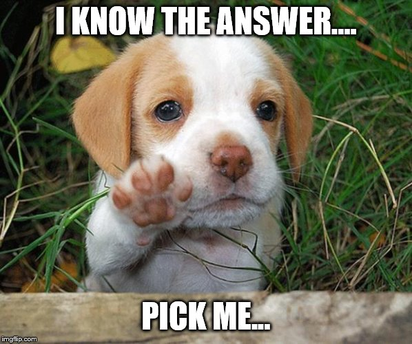 dog puppy bye | I KNOW THE ANSWER.... PICK ME... | image tagged in dog puppy bye | made w/ Imgflip meme maker