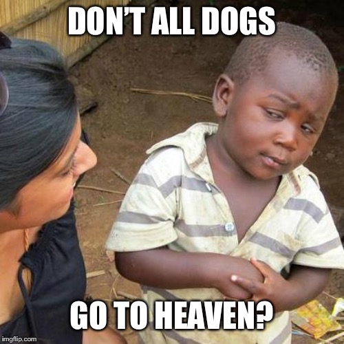 Third World Skeptical Kid Meme | DON'T ALL DOGS GO TO HEAVEN? | image tagged in memes,third world skeptical kid | made w/ Imgflip meme maker