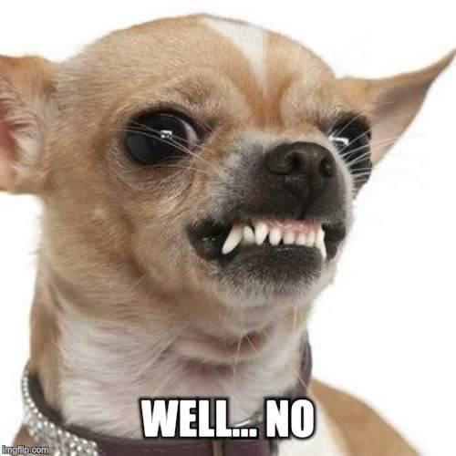 Angry chihuahua  | WELL... NO. | image tagged in angry chihuahua | made w/ Imgflip meme maker