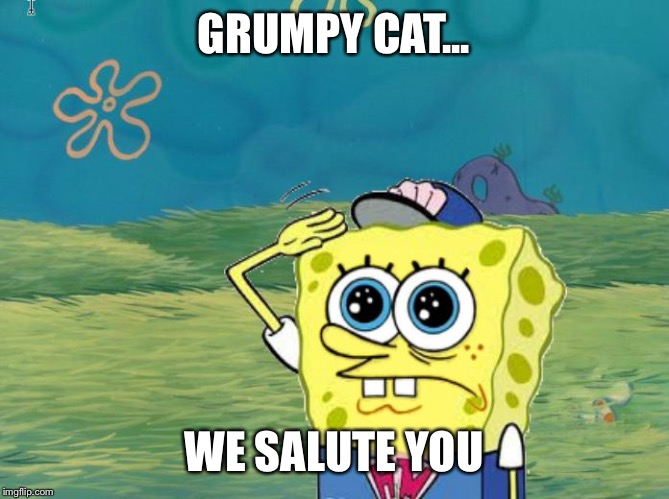 Spongebob salute |  GRUMPY CAT... WE SALUTE YOU | image tagged in spongebob salute | made w/ Imgflip meme maker