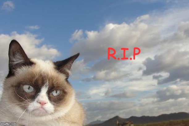 You will be missed, Tarder Sauce! | R.I.P | image tagged in memes,grumpy cat sky,grumpy cat | made w/ Imgflip meme maker