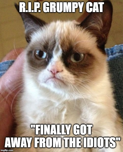 "R.i.p. grumpy cat...She was the first meme I ever saw. | R.I.P. GRUMPY CAT ""FINALLY GOT AWAY FROM THE IDIOTS"" 