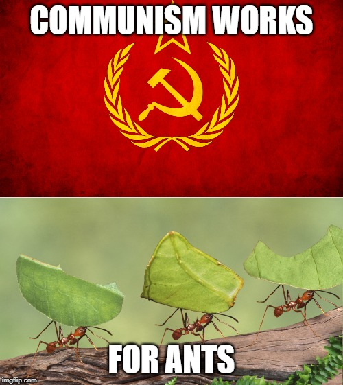 Ant Commies |  COMMUNISM WORKS; FOR ANTS | image tagged in politics,ants,communism | made w/ Imgflip meme maker