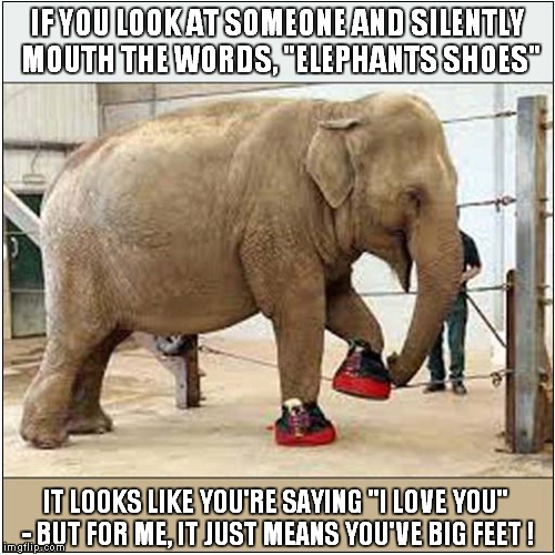"Elephants Shoes for Lip Readers | IF YOU LOOK AT SOMEONE AND SILENTLY MOUTH THE WORDS, ""ELEPHANTS SHOES"" IT LOOKS LIKE YOU'RE SAYING ""I LOVE YOU"" - BUT FOR ME, IT JUST MEANS  