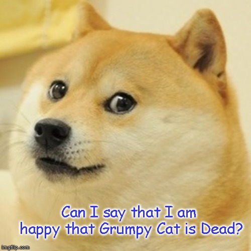 Ding Dong the Grumpy Cat is Gone | Can I say that I am happy that Grumpy Cat is Dead? | image tagged in doge,grumpy cat,dog | made w/ Imgflip meme maker