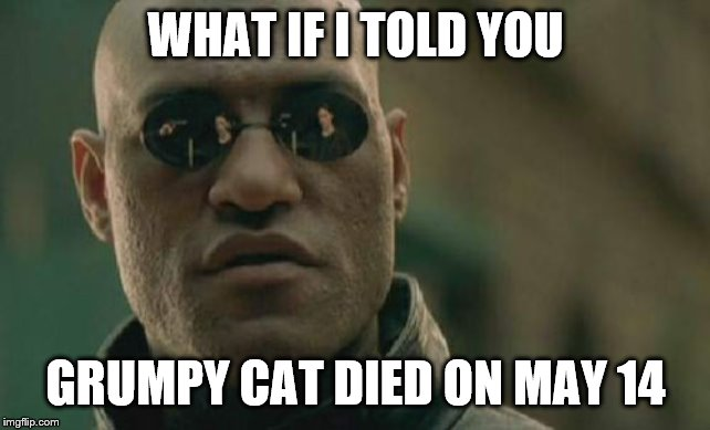 Matrix Morpheus Meme | WHAT IF I TOLD YOU GRUMPY CAT DIED ON MAY 14 | image tagged in memes,matrix morpheus | made w/ Imgflip meme maker