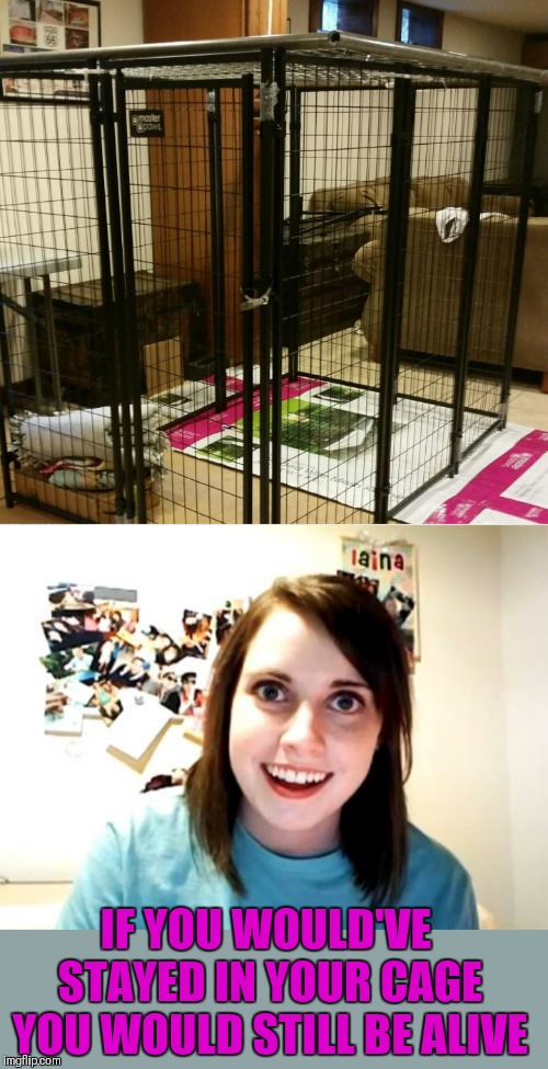 IF YOU WOULD'VE STAYED IN YOUR CAGE YOU WOULD STILL BE ALIVE | image tagged in memes,overly attached girlfriend | made w/ Imgflip meme maker