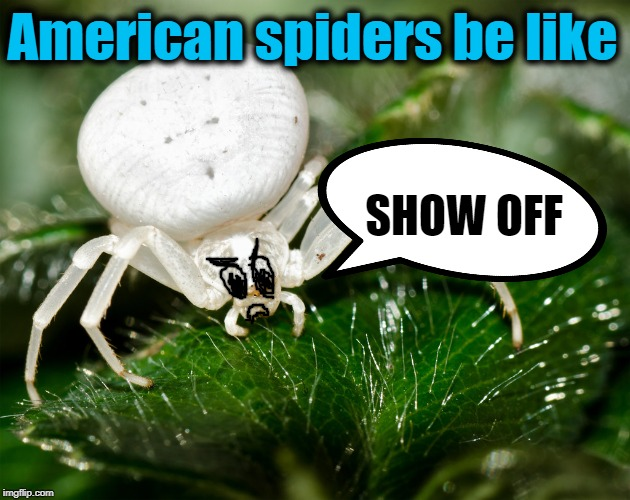 American spiders be like SHOW OFF | made w/ Imgflip meme maker