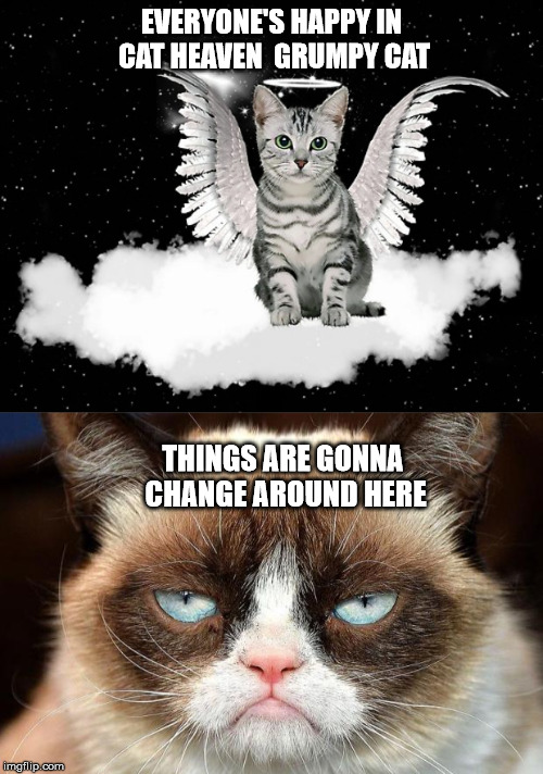 Image tagged in memes,grumpy cat not amused - Imgflip