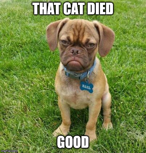 Grumpy Dog |  THAT CAT DIED; GOOD | image tagged in grumpy dog | made w/ Imgflip meme maker