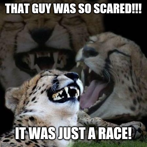 Laughing Cheetah | THAT GUY WAS SO SCARED!!! IT WAS JUST A RACE! | image tagged in laughing cheetah | made w/ Imgflip meme maker