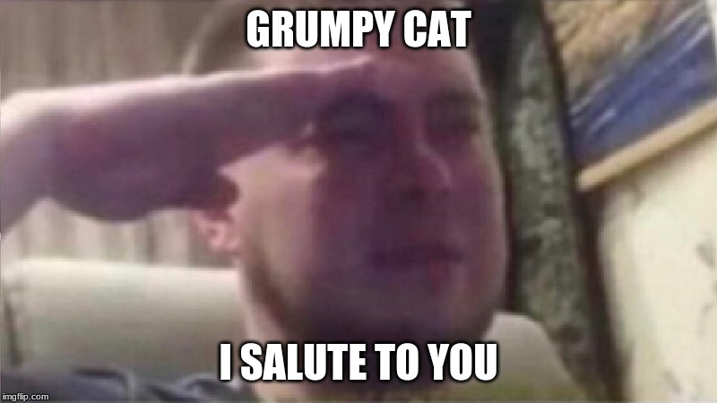 Crying Salute |  GRUMPY CAT; I SALUTE TO YOU | image tagged in crying salute | made w/ Imgflip meme maker
