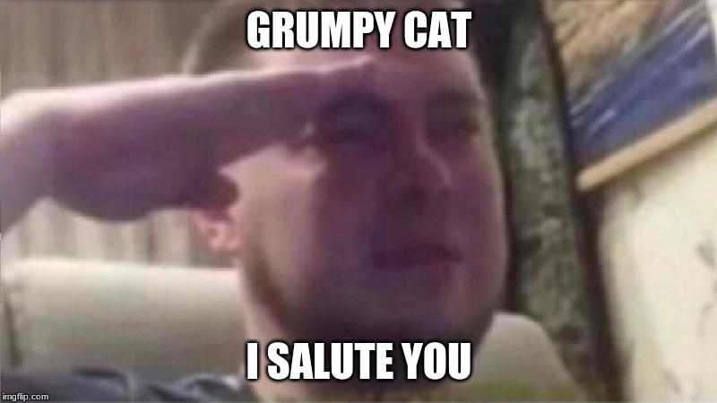 Crying Salute |  GRUMPY CAT; I SALUTE YOU | image tagged in crying salute | made w/ Imgflip meme maker