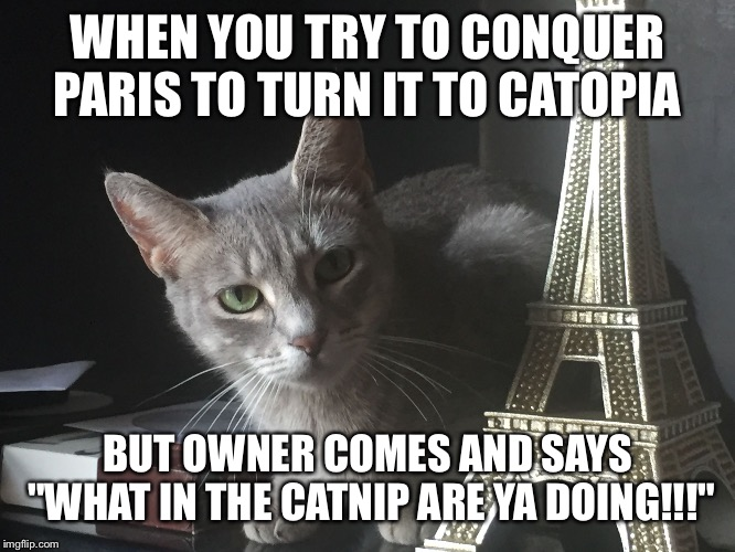 "Trouble cat | WHEN YOU TRY TO CONQUER PARIS TO TURN IT TO CATOPIA BUT OWNER COMES AND SAYS ""WHAT IN THE CATNIP ARE YA DOING!!!"" 