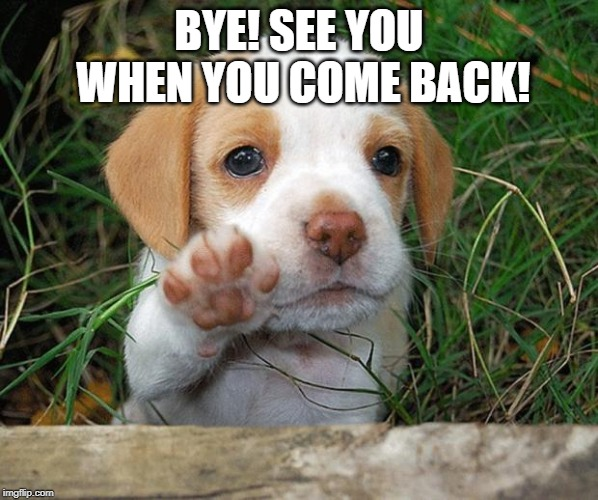 dog puppy bye | BYE! SEE YOU WHEN YOU COME BACK! | image tagged in dog puppy bye | made w/ Imgflip meme maker
