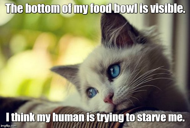 The bottom of my food bowl is visible. I think my human is trying to starve me. | image tagged in memes,first world problems cat | made w/ Imgflip meme maker