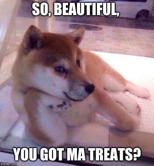 Flirting Doge | SO, BEAUTIFUL, YOU GOT MA TREATS? | image tagged in flirting doge | made w/ Imgflip meme maker