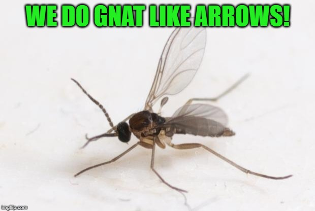 Fucking gnats | WE DO GNAT LIKE ARROWS! | image tagged in fucking gnats | made w/ Imgflip meme maker
