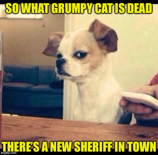Mad dog |  SO WHAT GRUMPY CAT IS DEAD; THERE'S A NEW SHERIFF IN TOWN | image tagged in mad dog | made w/ Imgflip meme maker