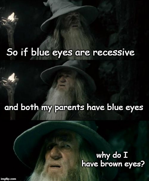 well the mailman delivered more than just mail... | So if blue eyes are recessive and both my parents have blue eyes why do I have brown eyes? | image tagged in memes,confused gandalf,adopted,hahahaha,funny,funny memes | made w/ Imgflip meme maker