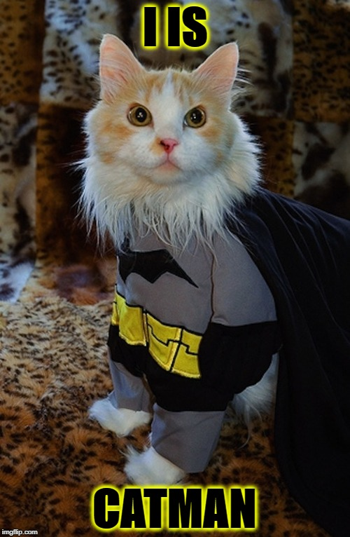 I IS | I IS CATMAN | image tagged in i is | made w/ Imgflip meme maker
