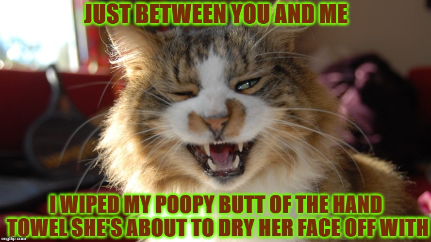 BUTT WIPE | JUST BETWEEN YOU AND ME I WIPED MY POOPY BUTT OF THE HAND TOWEL SHE'S ABOUT TO DRY HER FACE OFF WITH | image tagged in butt wipe | made w/ Imgflip meme maker