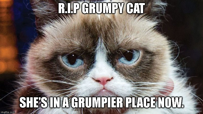 R.I.P Grumpy Cat | R.I.P GRUMPY CAT SHE'S IN A GRUMPIER PLACE NOW. | image tagged in grumpy cat,r i p | made w/ Imgflip meme maker