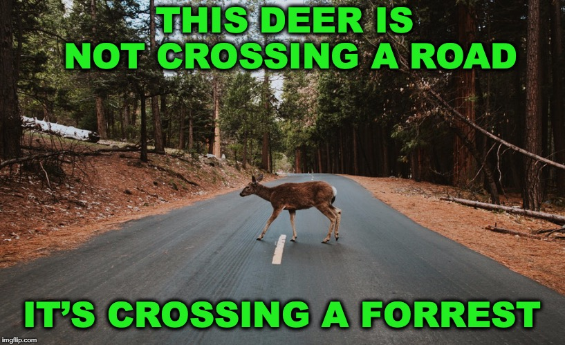 How Deer See It | THIS DEER IS NOT CROSSING A ROAD IT'S CROSSING A FORREST | image tagged in deer,animal crossing,road | made w/ Imgflip meme maker