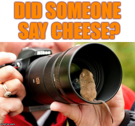 Confusing for mice when you yell cheese |  DID SOMEONE SAY CHEESE? | image tagged in photography,cheese,mouse,funny meme | made w/ Imgflip meme maker