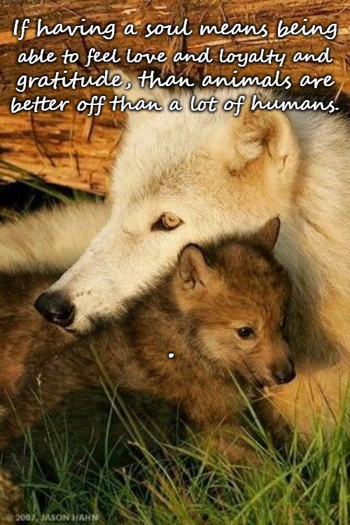 Wolves | If having a soul means being able to feel love and loyalty and gratitude, than animals are . better off than a lot of humans. | image tagged in wolves,animals,nativve american,native americans,american indians,tribe | made w/ Imgflip meme maker