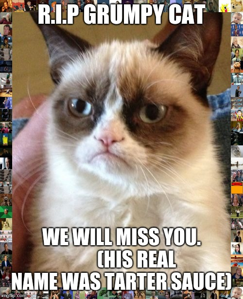 I cant believe he died | R.I.P GRUMPY CAT WE WILL MISS YOU.        (HIS REAL NAME WAS TARTER SAUCE) | image tagged in grumpy cat,r i p,sad,cat,death,why | made w/ Imgflip meme maker