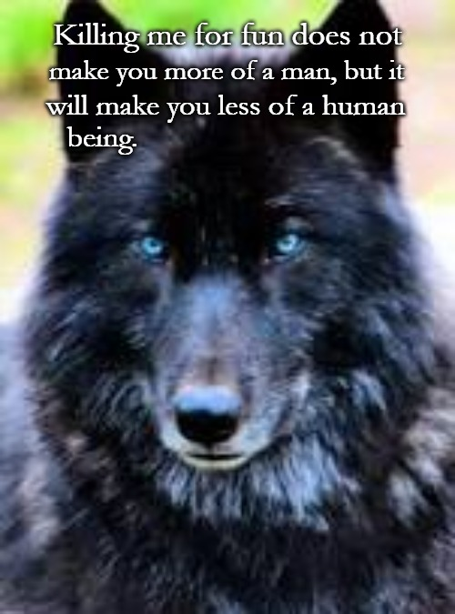 Wolf Wisdom | Killing me for fun does not make you more of a man, but it will make you less of a human being. | image tagged in wolves,wolf,animals,native american,native americans,tribe | made w/ Imgflip meme maker