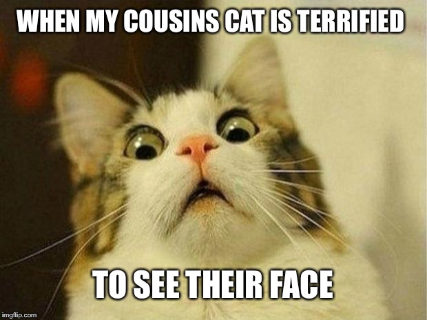 Scared Cat | WHEN MY COUSINS CAT IS TERRIFIED TO SEE THEIR FACE | image tagged in memes,scared cat | made w/ Imgflip meme maker