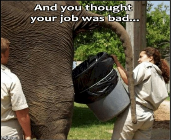 image tagged in elephant,poop,bad day | made w/ Imgflip meme maker