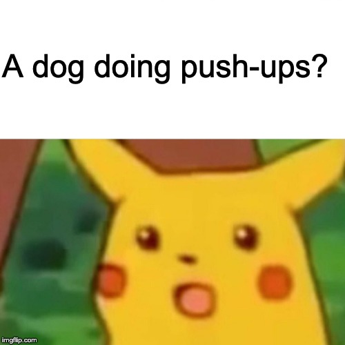 Surprised Pikachu Meme | A dog doing push-ups? | image tagged in memes,surprised pikachu | made w/ Imgflip meme maker