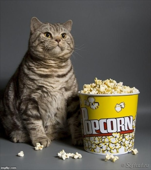 image tagged in cat eating popcorn | made w/ Imgflip meme maker