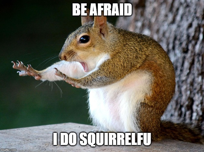 he does squirrelfu | BE AFRAID I DO SQUIRRELFU | image tagged in funny animals | made w/ Imgflip meme maker