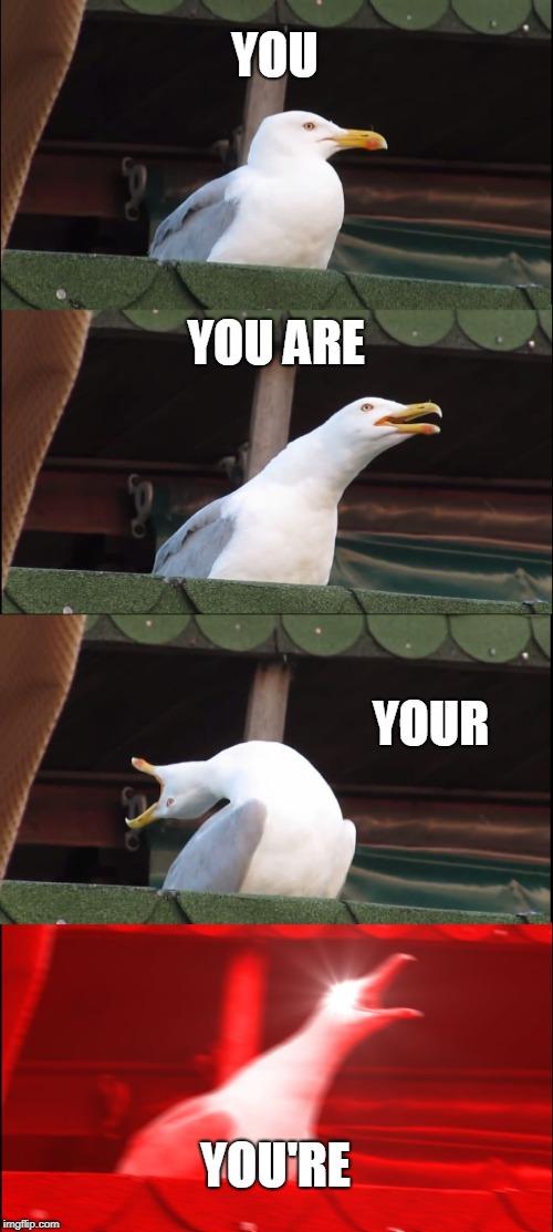 Bad Grammar And Spelling Memes Memes Gifs Imgflip