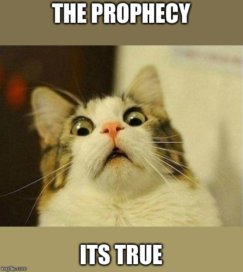 Scared Cat | THE PROPHECY ITS TRUE | image tagged in memes,scared cat | made w/ Imgflip meme maker