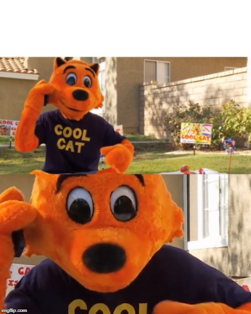 Cool Cat | image tagged in cat,mascot,intense,sweating,cool cat,orange cat | made w/ Imgflip meme maker