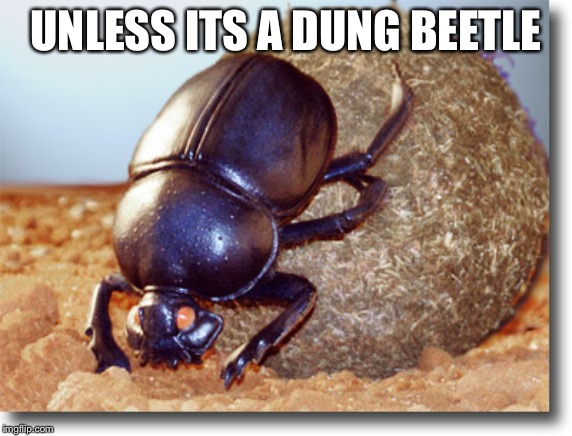 UNLESS ITS A DUNG BEETLE | image tagged in dung beetle | made w/ Imgflip meme maker