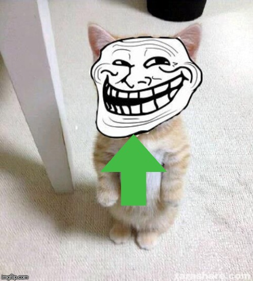 Troll Cat | image tagged in troll cat | made w/ Imgflip meme maker