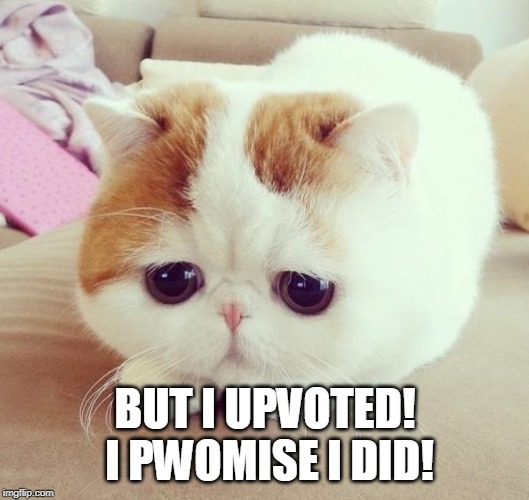 Sad Cat | BUT I UPVOTED! I PWOMISE I DID! | image tagged in sad cat | made w/ Imgflip meme maker
