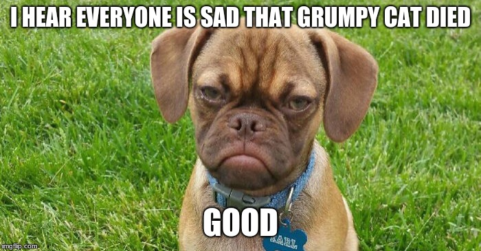 Grumpy dog 5/22/19 |  I HEAR EVERYONE IS SAD THAT GRUMPY CAT DIED; GOOD | image tagged in grumpy dog,funny,rip grumpy cat,pessimist,doggo | made w/ Imgflip meme maker