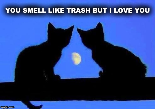 kitties and the moon | YOU SMELL LIKE TRASH BUT I LOVE YOU | image tagged in kitties and the moon,smells,smelly,cats,moon | made w/ Imgflip meme maker
