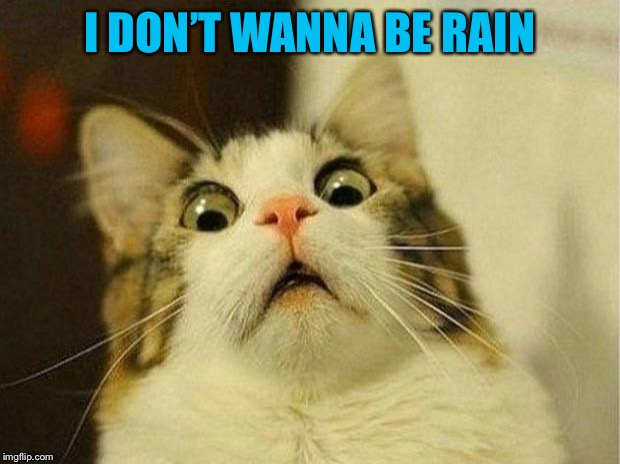 Scared Cat Meme | I DON'T WANNA BE RAIN | image tagged in memes,scared cat | made w/ Imgflip meme maker