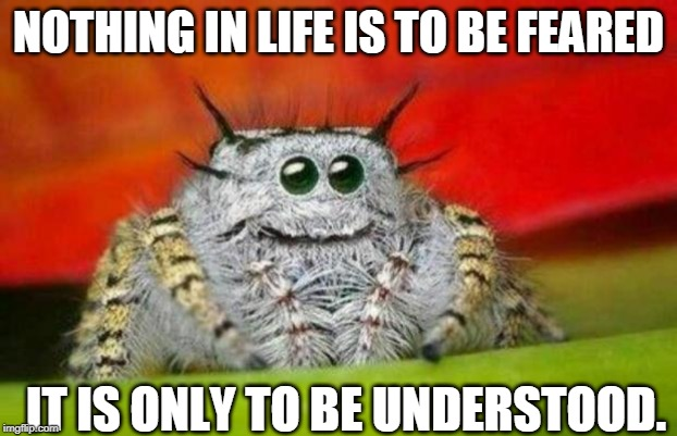 misunderstood spider | NOTHING IN LIFE IS TO BE FEARED IT IS ONLY TO BE UNDERSTOOD. | image tagged in misunderstood spider | made w/ Imgflip meme maker