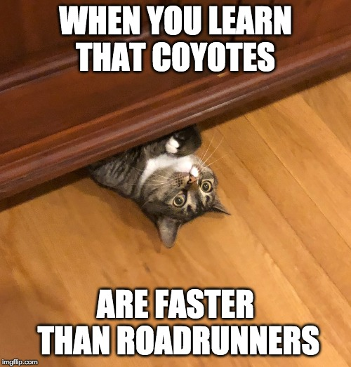 Surprised Cat | WHEN YOU LEARN THAT COYOTES ARE FASTER THAN ROADRUNNERS | image tagged in surprised cat | made w/ Imgflip meme maker