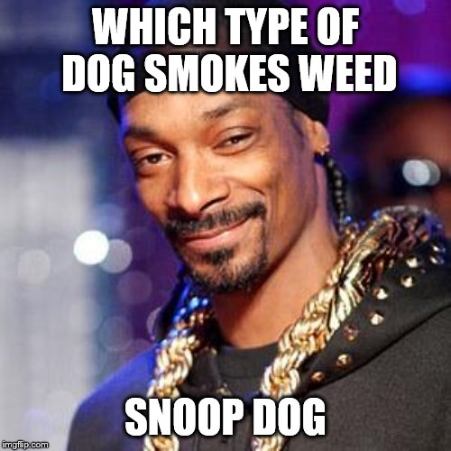 Snoop dogg |  WHICH TYPE OF DOG SMOKES WEED; SNOOP DOG | image tagged in snoop dogg | made w/ Imgflip meme maker