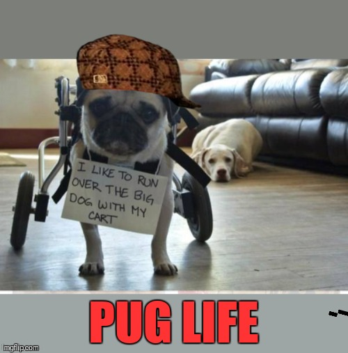 Thug Life | PUG LIFE | image tagged in memes,funny,pugs,dogs,thug life,raydog | made w/ Imgflip meme maker